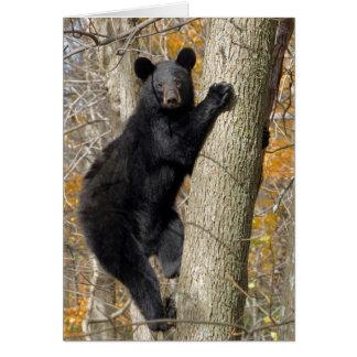 Tarjeta Oso negro americano que sube un árbol