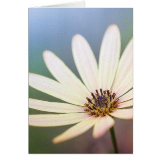 Tarjeta Osteospermum