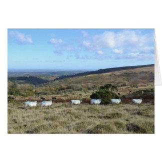 Tarjeta Ovejas de Dartmoor