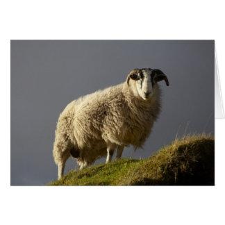 Tarjeta Ovejas, península de Trotternish, isla de Skye,