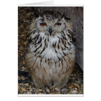 Tarjeta owl1