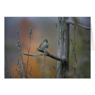 Tarjeta pájaro en la parada de camiones