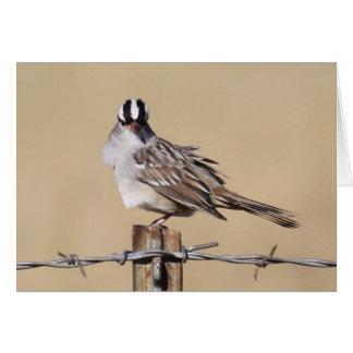 Tarjeta Pájaro en un alambre
