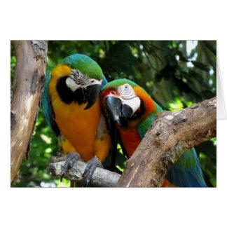 Tarjeta Pájaros del amor