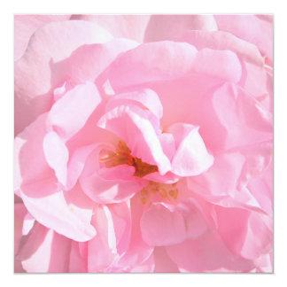 Tarjeta palidezca - los pétalos color de rosa rosados