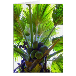 Tarjeta Palma de coco doble