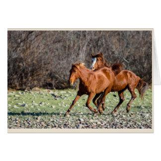 Tarjeta Pares de caballos salvajes