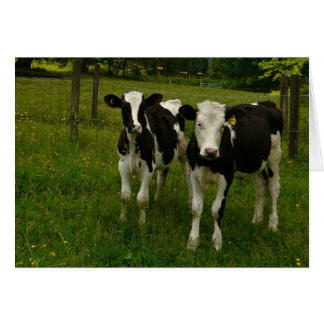 Tarjeta Pares de Holstein Fresian de bueyes