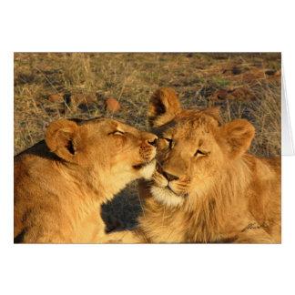 Tarjeta (Pares del león de los clubs de leones) (el