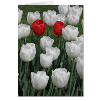 Tarjeta Pares perfectos (tulipanes rojos y blancos)