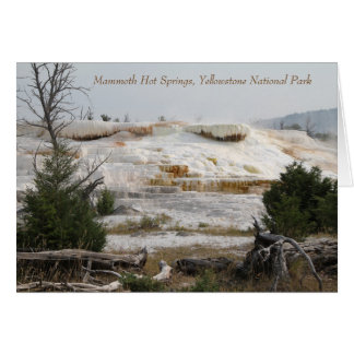 Tarjeta Parque nacional de Mammoth Hot Springs,