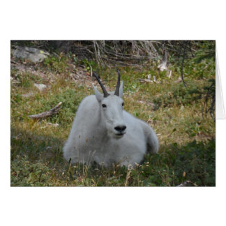 Tarjeta Parque Nacional Glacier de la cabra de montaña