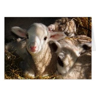 Tarjeta Pascua feliz - corderos de Pascua
