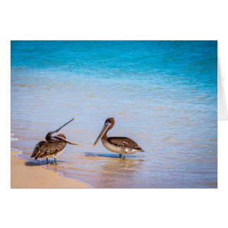 Tarjeta Pelícanos de la playa de Bachas
