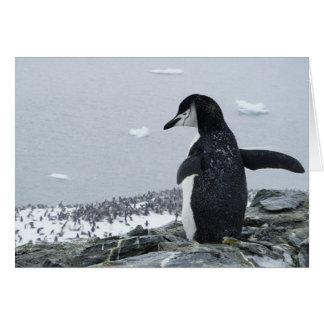 Tarjeta Penguinzilla