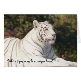 Tarjeta Pensamiento único del tigre blanco en usted