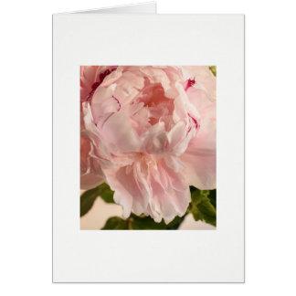 Tarjeta Peony rosado (Paeonia)