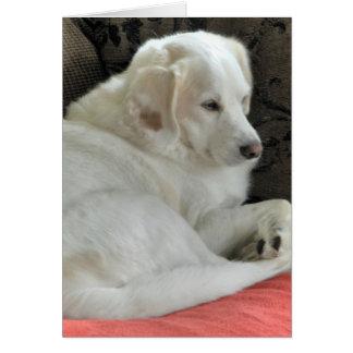 Tarjeta Pequeño retrato blanco lindo del perro
