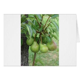 Tarjeta Peras verdes que cuelgan en un peral creciente