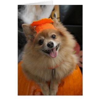 Tarjeta Perrito astuto sonriente de Pomeranian en la