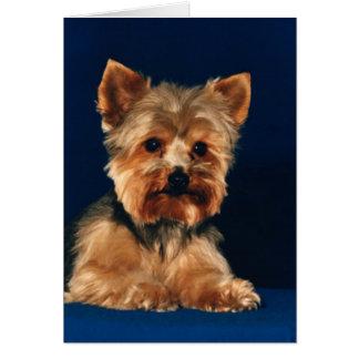 Tarjeta Perrito de Yorkshire Terrier