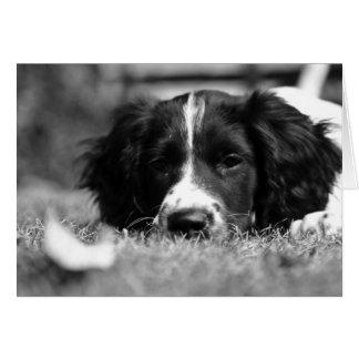 Tarjeta Perro de aguas de saltador inglés
