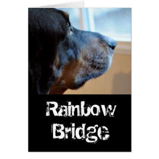Tarjeta Perro del coon del puente del arco iris