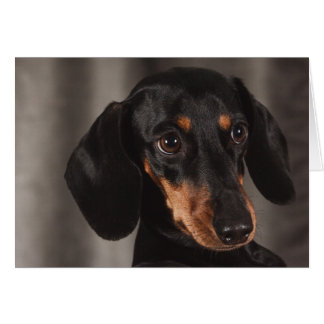 Tarjeta Perro lindo del Dachshund del ojo del perrito
