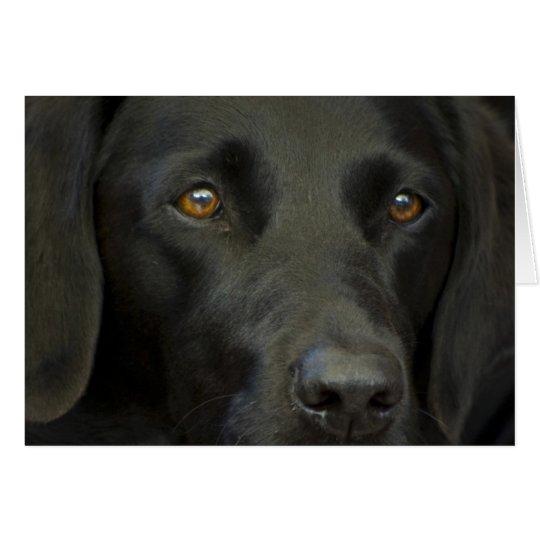 Tarjeta Perro negro de Labrador