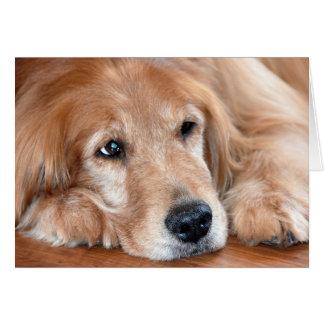 Tarjeta perro-pensamiento de oro en usted