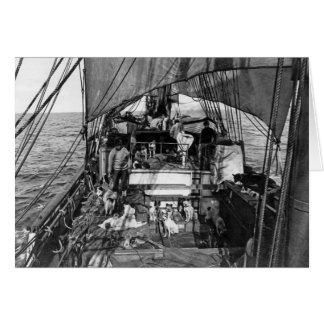 Tarjeta Perros de trineo en el mar