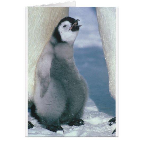 Tarjeta Pingüino