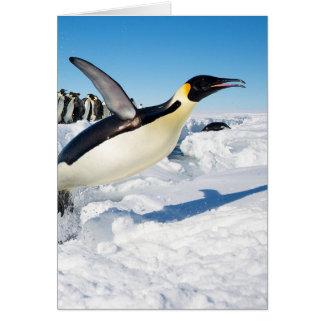 Tarjeta Pingüino en saltar de la Antártida del agua