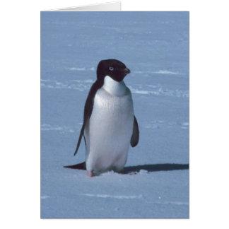 Tarjeta Pingüino solitario en nieve en nieve