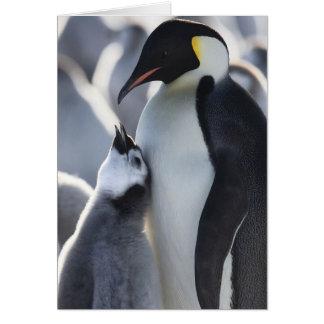 Tarjeta ¡Pingüinos!