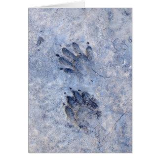 Tarjeta Pistas del mapache--1