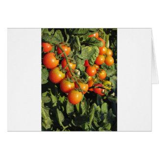 Tarjeta Plantas de tomate que crecen en el jardín