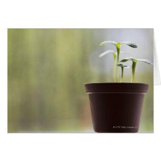 Tarjeta Plantas del girasol que brotan en pote