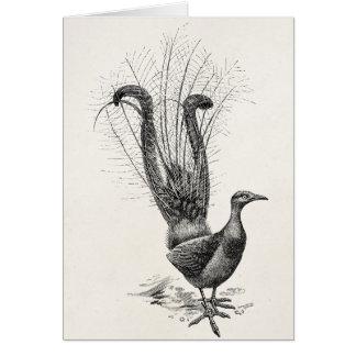 Tarjeta Plantilla del ejemplo del Lyrebird del pájaro del