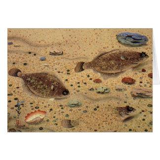 Tarjeta Platijas del vintage, pescados planos de la vida