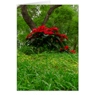 Tarjeta Poinsettia rojo