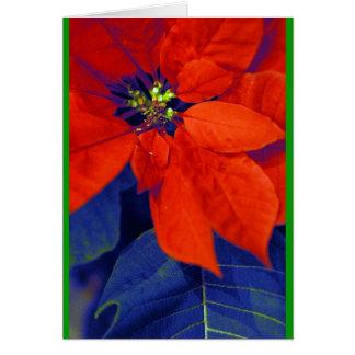 Tarjeta Poinsettias y hojas del azul