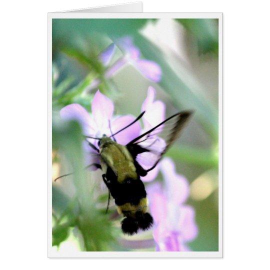 Tarjeta Polilla de colibrí de Clearwing del Snowberry