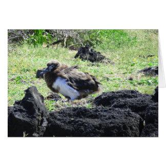 Tarjeta Polluelo del albatros