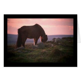 Tarjeta Potro de Dartmoor en la puesta del sol
