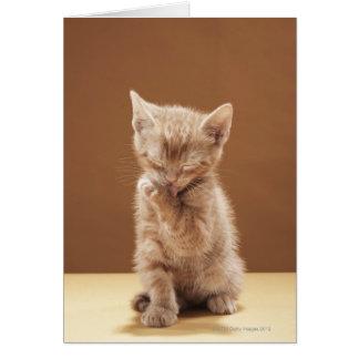 Tarjeta Preparación del gatito