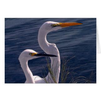 Tarjeta Presentación de Egrets