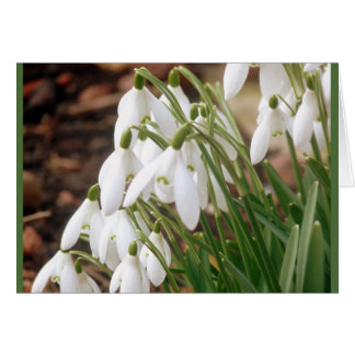 Tarjeta Primavera imponente Snowdrops