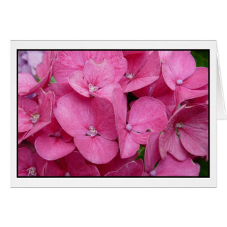 Tarjeta Primer rosado del Hydrangea