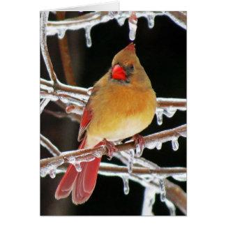Tarjeta Princesa del hielo - pájaro cardinal femenino